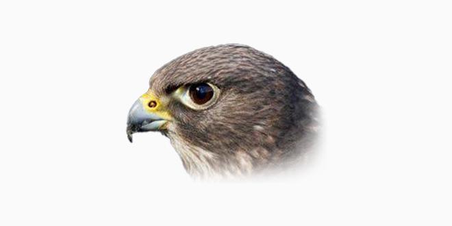 Falco Icon Studio - Icon Editor