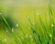 Green World - Windows 7 Theme - 4.jpg