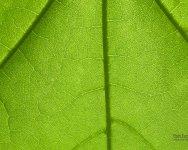Green World - Windows 7 Theme - 6.jpg
