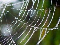Spider Web - Windows 7 Wallpaper - Screenshot.jpg