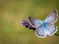 Butterflies - Windows 7 Theme - 1.jpg