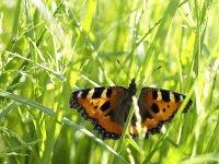 Butterflies - Windows 7 Theme - 3.jpg