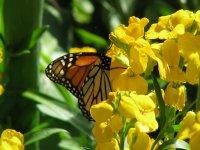 Butterflies - Windows 7 Theme - 4.jpg