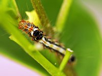 Insects dynamic - Windows 7 Theme - 2.jpg