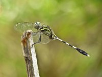 Insects dynamic - Windows 7 Theme - 3.jpg