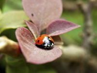Insects dynamic - Windows 7 Theme - 5.jpg