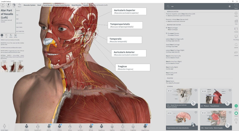 Die iOS-Brücke steht noch: Preisgekrönte Anatomie-App auf Windows 10 ...